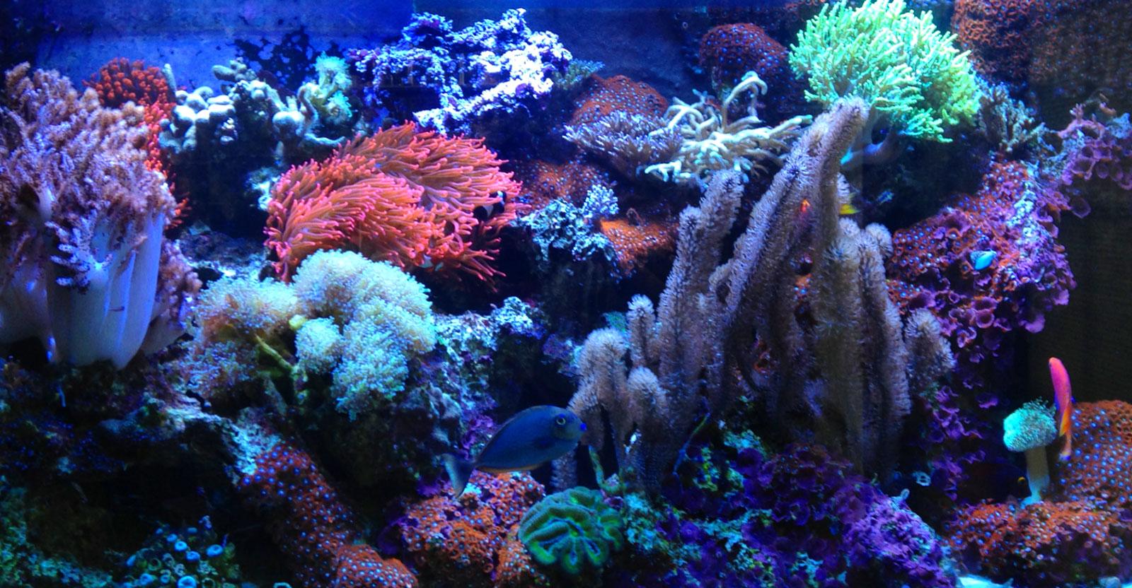 David's Aquariums Maintenance & Sales - New Jersey